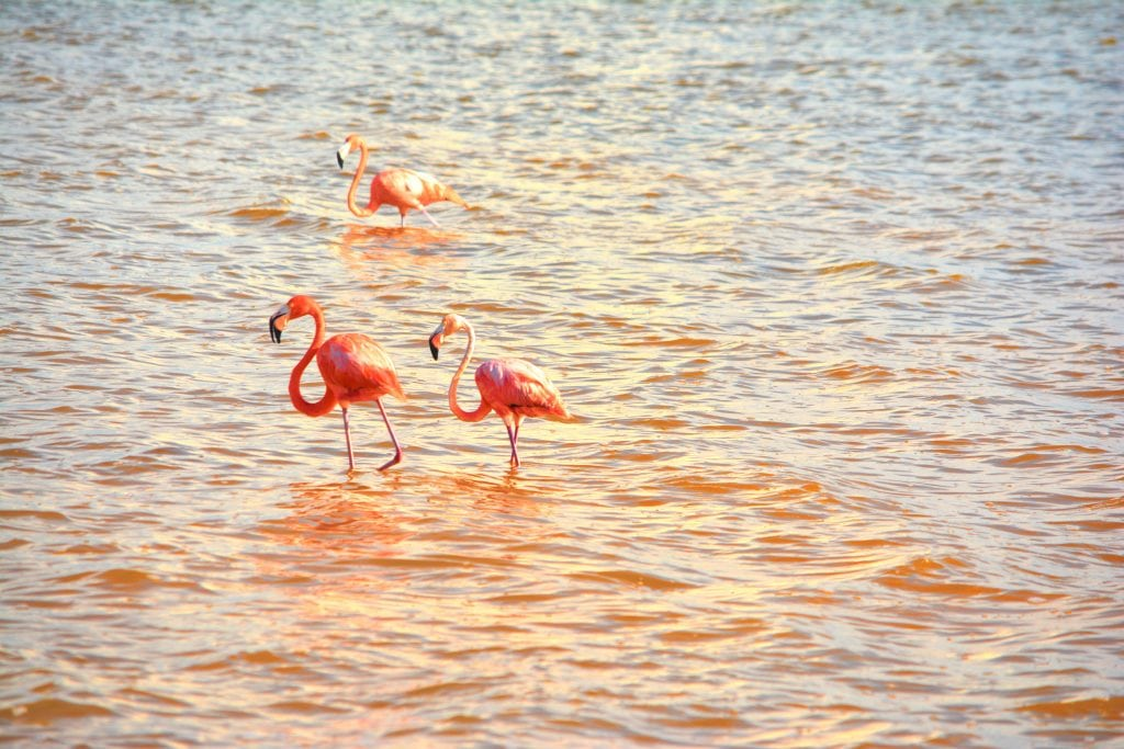 flamingos-yucatan